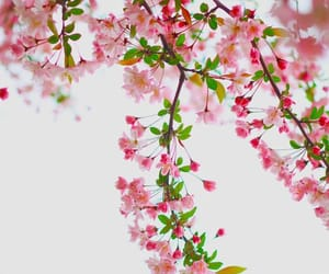 background, pink, and flower image