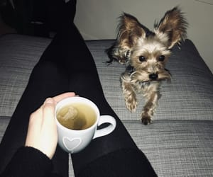 blog, Terrier, and dog image