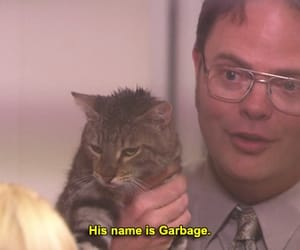 the office, cat, and funny image