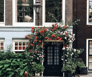 amsterdam, architecture, and flowers image