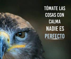 calma and frases en español image