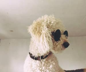 cool, french poodle, and rock image