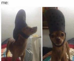 hahahaha, meme, and OMG image