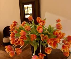 tulips and orange crush image