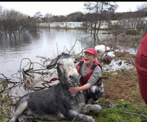 donkeys, save all animals now, and ireland image