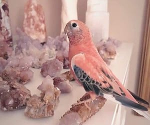 aesthetic, bird, and magical image