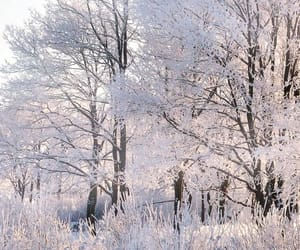 beautiful and winter image