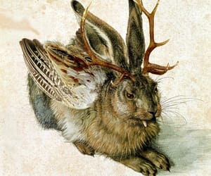 bavaria, cryptid, and albrecht durer image