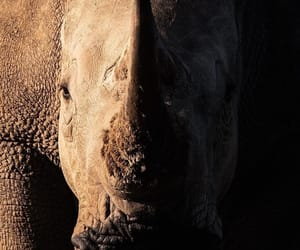 animal, rhino, and animals image