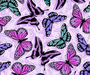 background, butterflies, and girly image