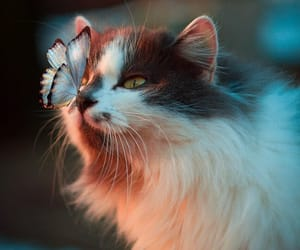 animals, butterfly, and kitten image