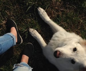 dog, nature, and shoes image