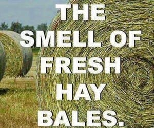 bales, words, and barn image