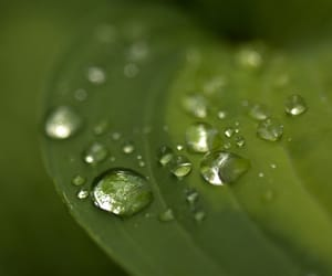 droplets, nature, and plants image