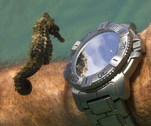 cute animals image