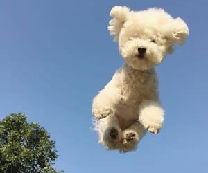 animals, doggo, and cute dog image