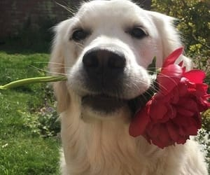 animals, cuteness, and doggie image