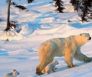 Animales, naturaleza, and winter image