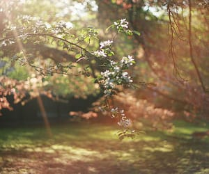 background, blossom, and earth image