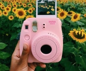 polaroid and sunflowers image