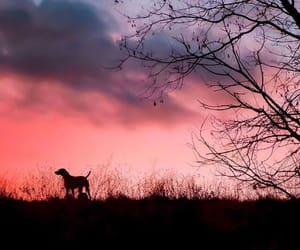 dog, dreamy, and sky image