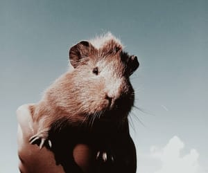 animals, gold, and guinea pig image