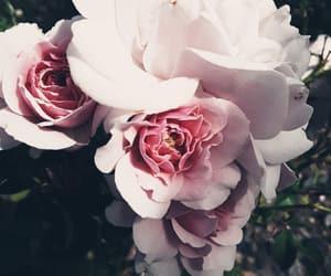 flower, morning, and til image