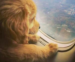 airplane, animals, and dogs image