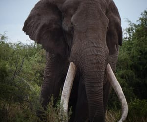 africa, elephants, and gray image