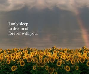 sunflower, love, and Dream image