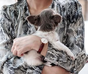 dog, fashion, and puppies image