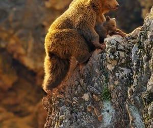 bear and nature image