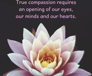 caring, understanding, and compassion image