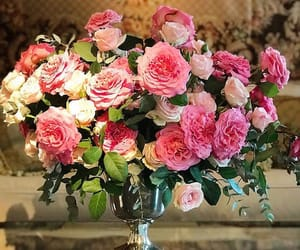 blooms, flowers, and pink image