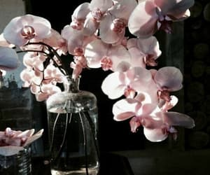 article, beautiful, and flowers image