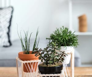 stand, diy, and plant image
