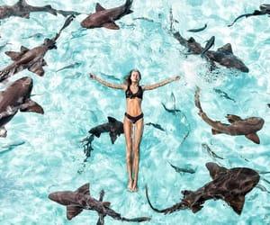 girl, shark, and travel image