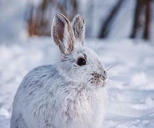 lapin, neige, and winter image
