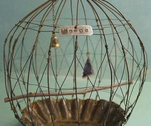 bird cage, cage, and decor image