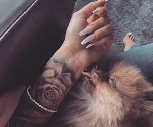 animal animals, nails goals, and cute pet pets image
