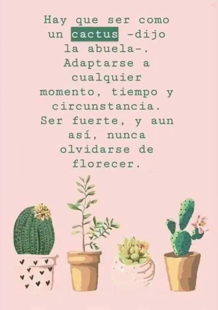Hay Que Ser Como Un Cactus Dijo La Abuela Adaptarse A Cualquier Momento Tiempo Y Circunstancia Ser Fuerte Y Aún Así Nunca Olvidarse De Florecer