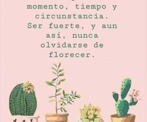 cactus, frases en español, and florecer image