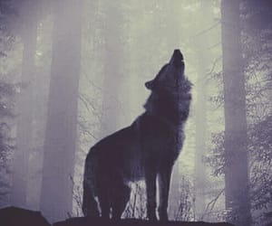 wolf, wolves, and filter edit image