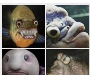 fish, funny, and meme image