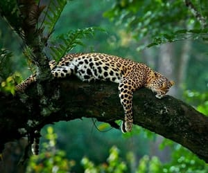 green, leopard, and nature image
