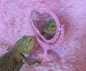 animal, pink, and lizard image