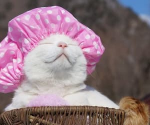 cat and shironeko image