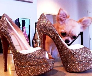shoes, heels, and dog image