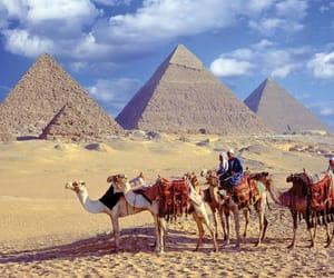 cairo, camel, and pyramids image