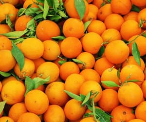 orange and fruit image